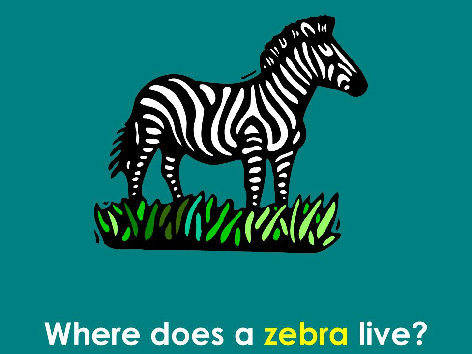 Where does a zebra live