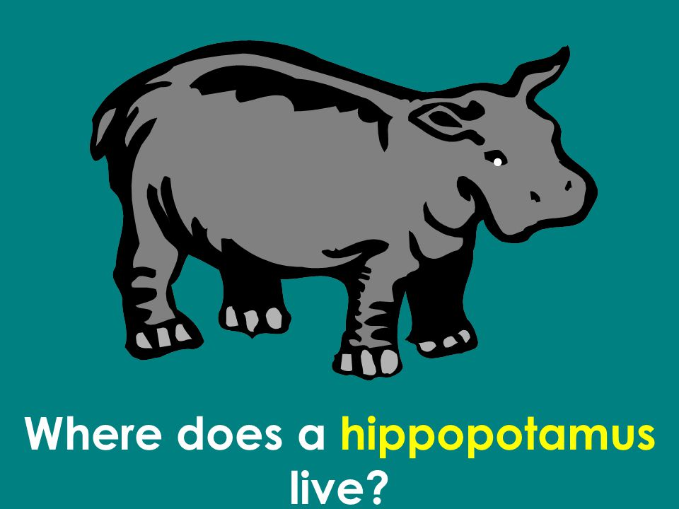 Where does a hippopotamus live
