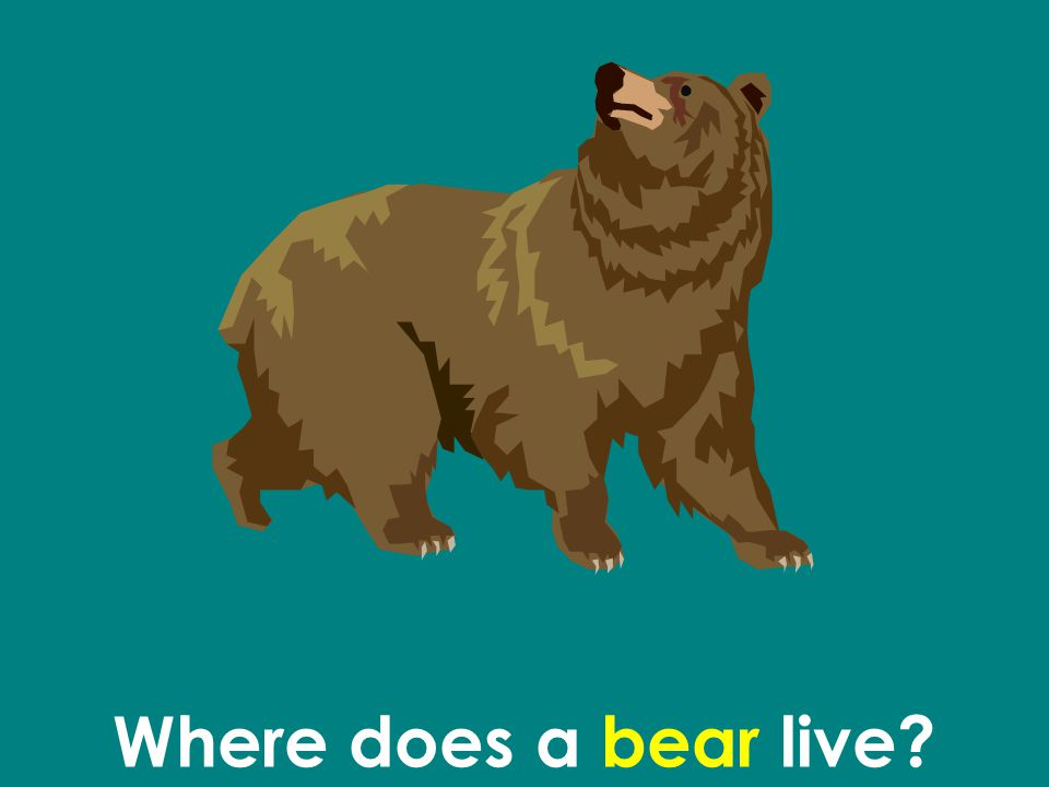 Where does a bear live