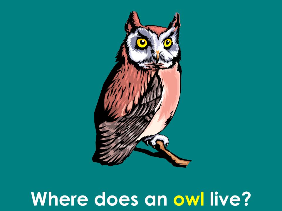 Where does an owl live