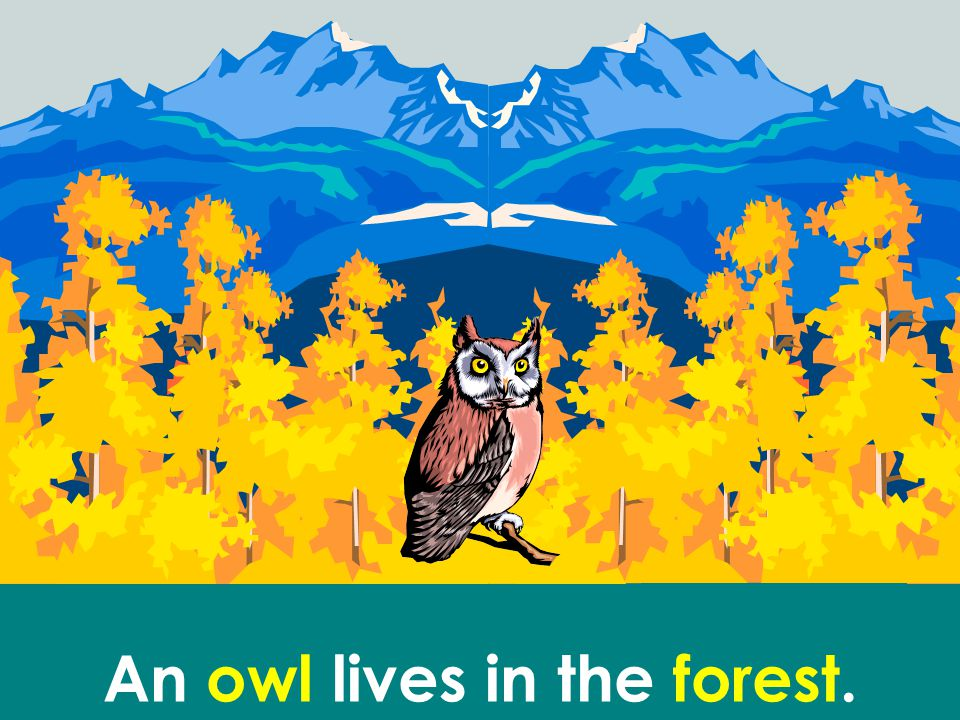 An owl lives in the forest.
