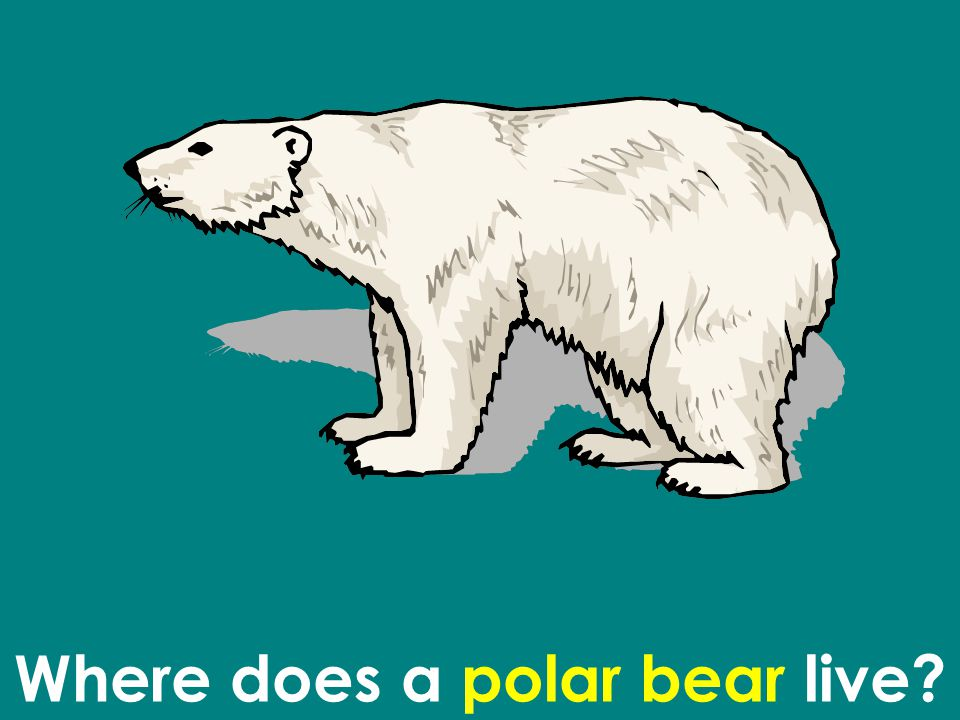Where does a polar bear live
