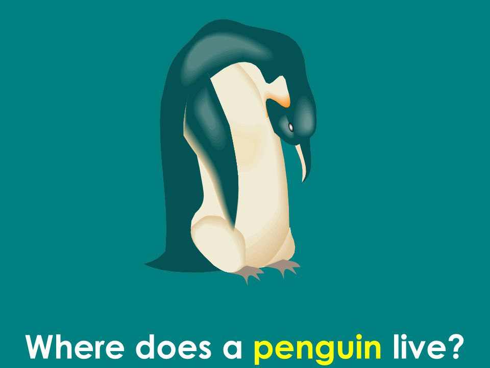 Where does a penguin live
