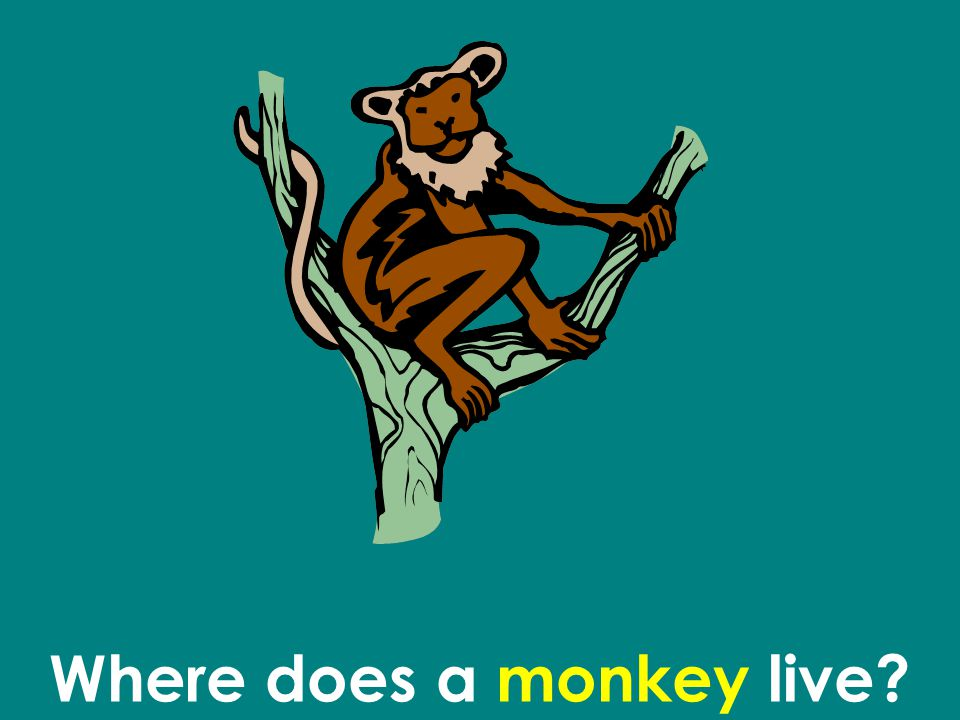 Where does a monkey live