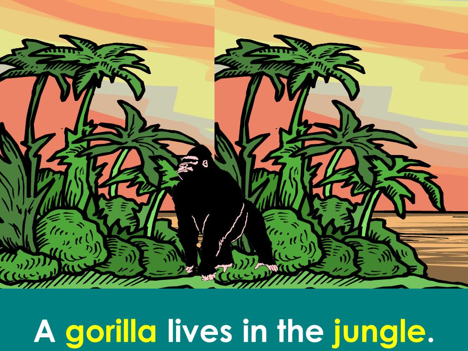 A gorilla lives in the jungle.