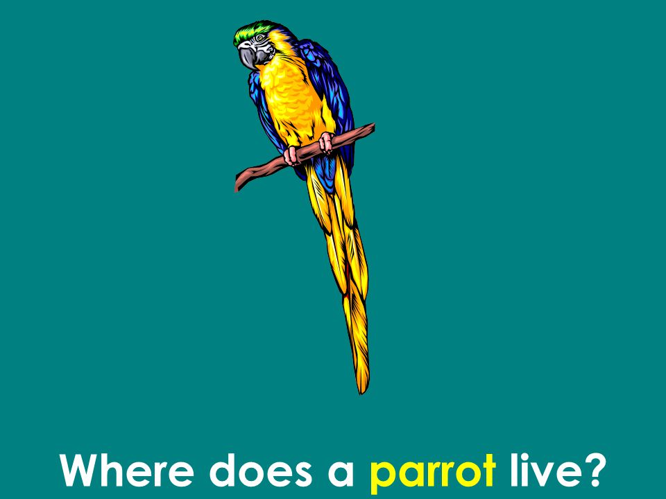 Where does a parrot live?