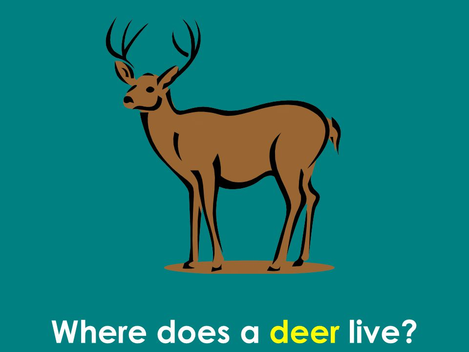 Where does a deer live