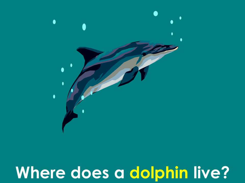 Where does a dolphin live