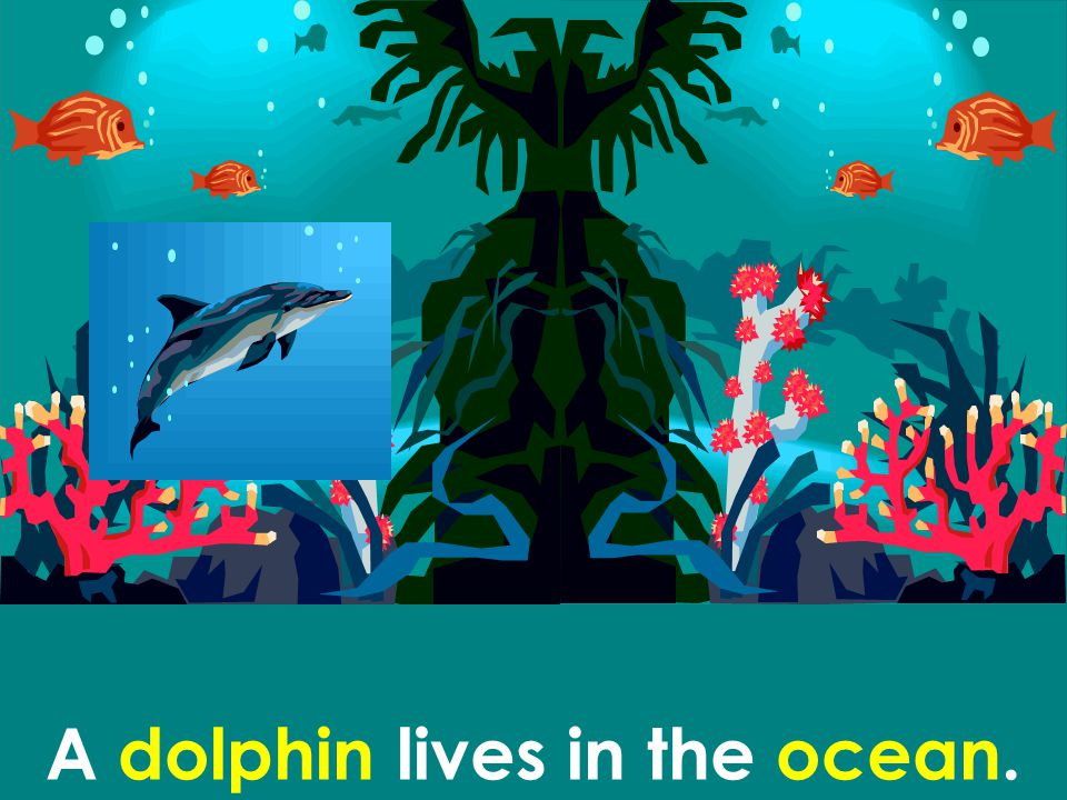 A dolphin lives in the ocean.