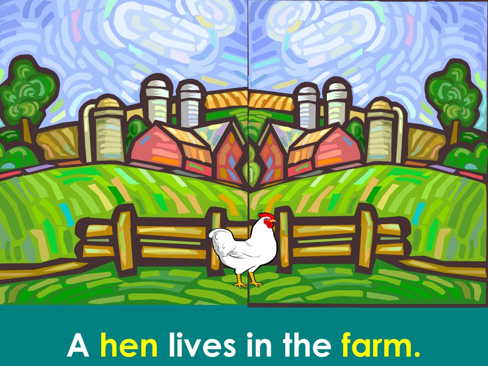 A hen lives in the farm.
