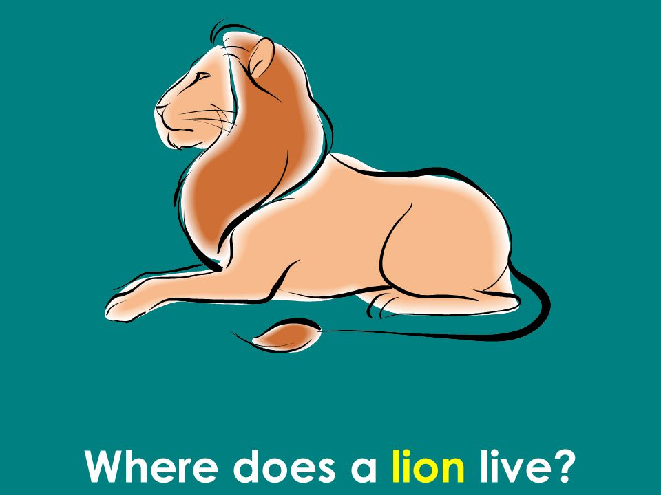 Where does a lion live