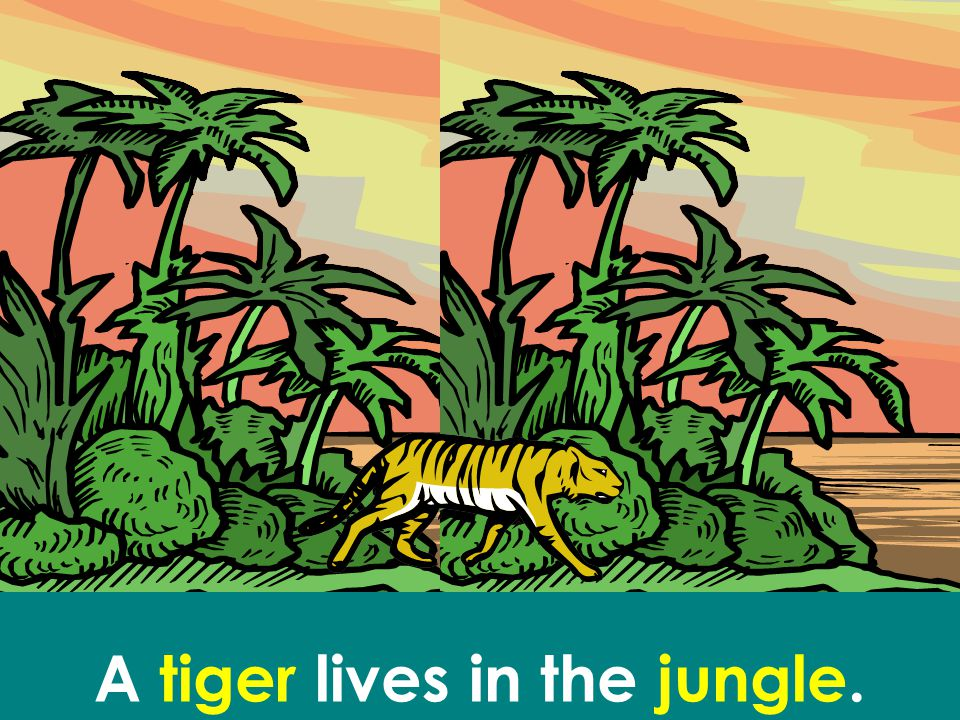 A tiger lives in the jungle.