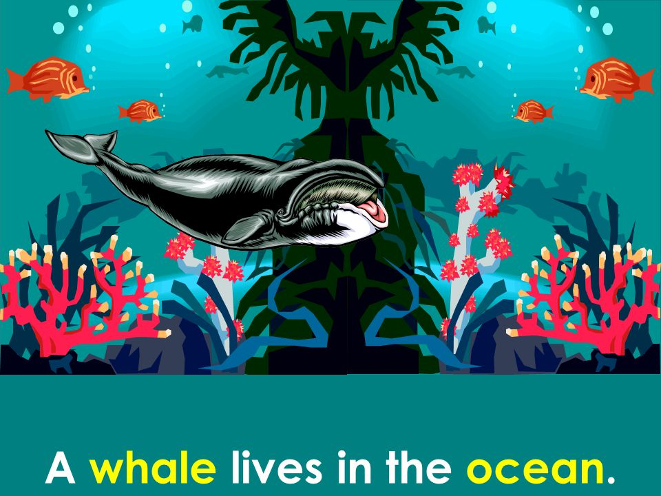 A whale lives in the ocean.
