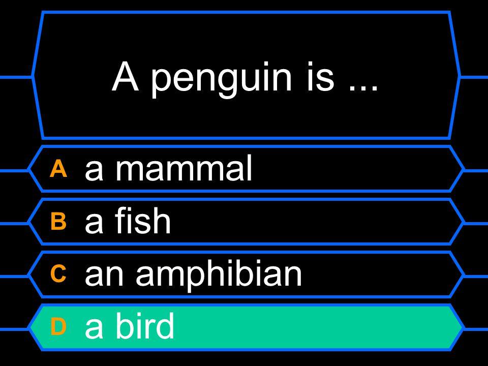 A penguin is... A a mammal B a fish C an amphibian D a bird