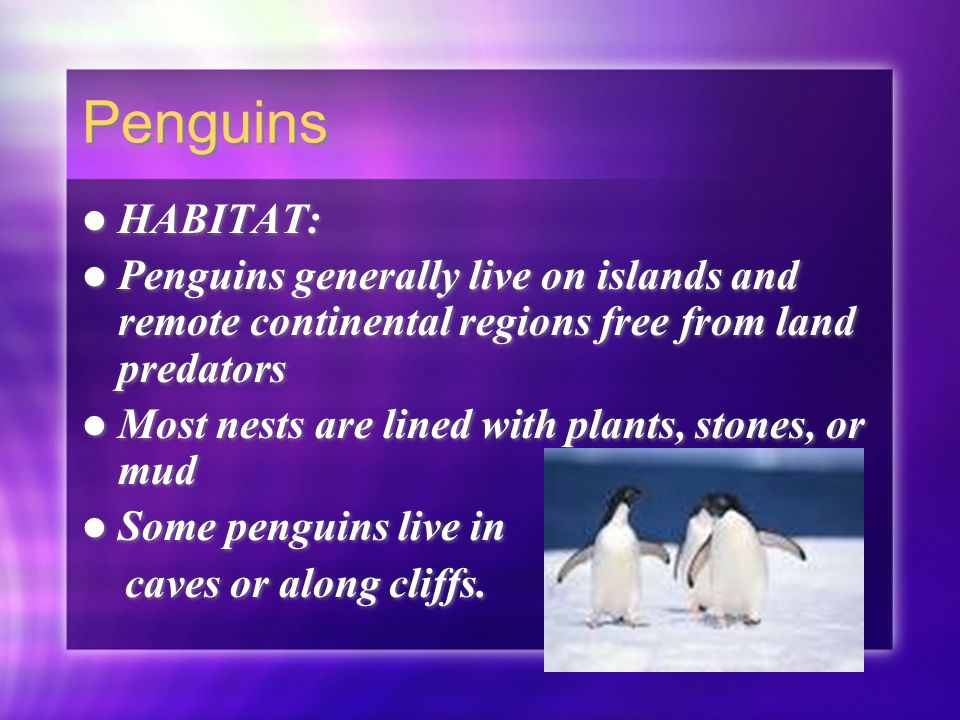 Penguins HABITAT: Penguins generally live on islands and remote continental regions free from land predators Most nests are lined with plants, stones,