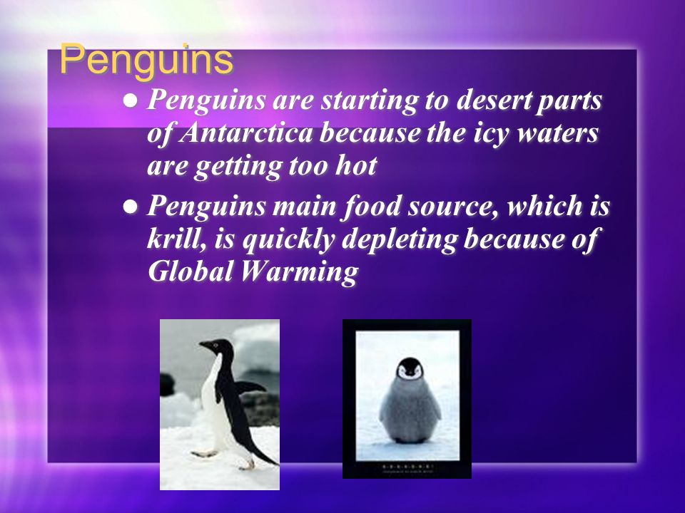 Penguins Penguins are starting to desert parts of Antarctica because the icy waters are getting too hot Penguins main food source, which is krill, is quickly depleting because of Global Warming Penguins are starting to desert parts of Antarctica because the icy waters are getting too hot Penguins main food source, which is krill, is quickly depleting because of Global Warming