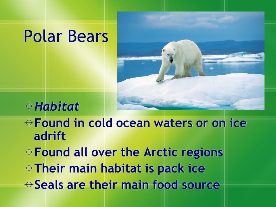 Polar Bears  Habitat  Found in cold ocean waters or on ice adrift  Found all over the Arctic regions  Their main habitat is pack ice  Seals are their main food source  Habitat  Found in cold ocean waters or on ice adrift  Found all over the Arctic regions  Their main habitat is pack ice  Seals are their main food source