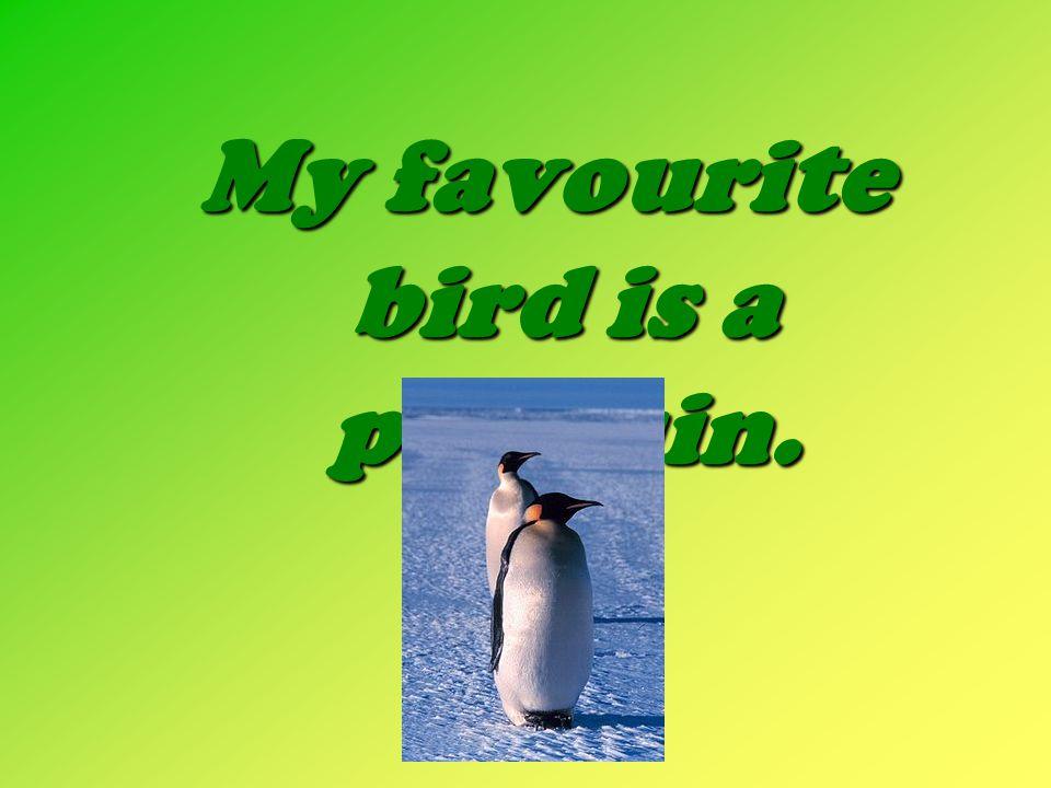 My favourite bird is a penguin.