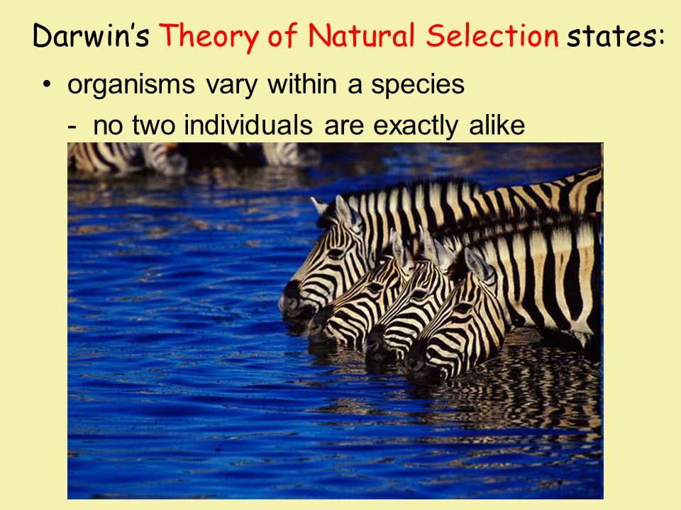 Darwin's Theory of Natural Selection states: organisms vary within a species - no two individuals are exactly alike