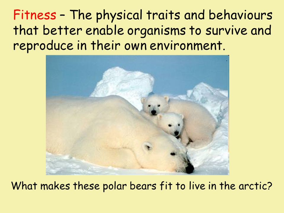 Fitness – The physical traits and behaviours that better enable organisms to survive and reproduce in their own environment. What makes these polar be