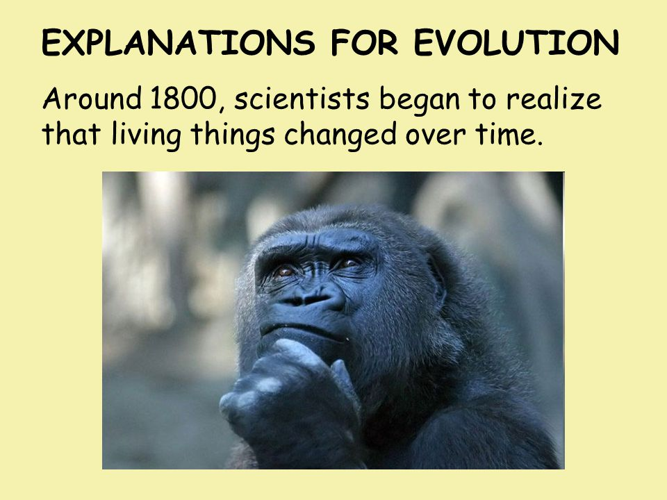EXPLANATIONS FOR EVOLUTION Around 1800, scientists began to realize that living things changed over time.