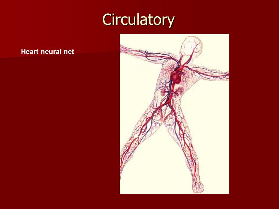 Circulatory Heart neural net