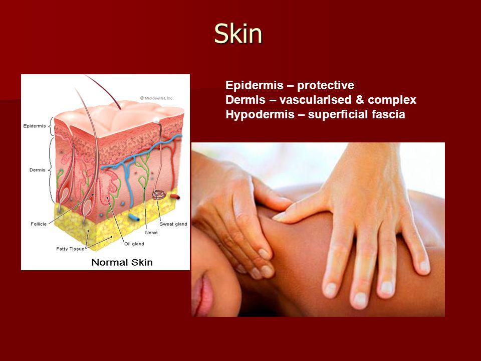 Skin Epidermis – protective Dermis – vascularised & complex Hypodermis – superficial fascia