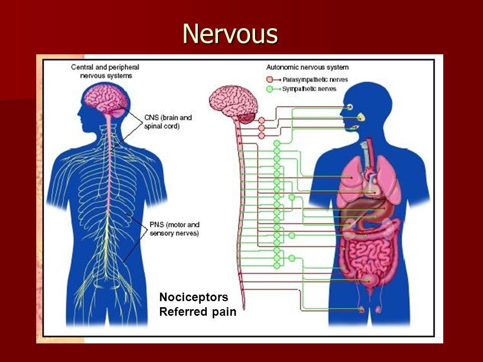 Nervous Nociceptors Referred pain