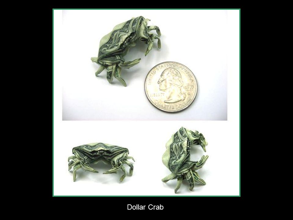 Dollar Crab