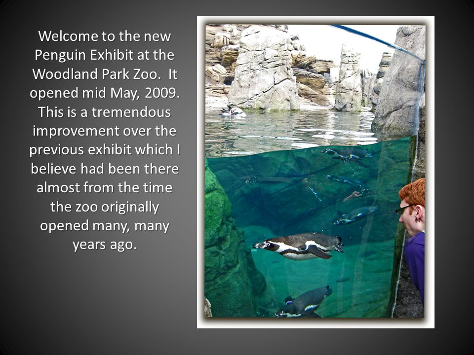 Welcome to the new Penguin Exhibit at the Woodland Park Zoo. It opened mid May, 2009. This is a tremendous improvement over the previous exhibit which