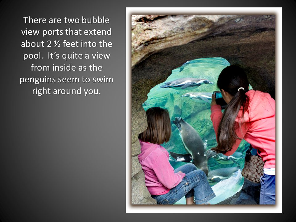 There are two bubble view ports that extend about 2 ½ feet into the pool.