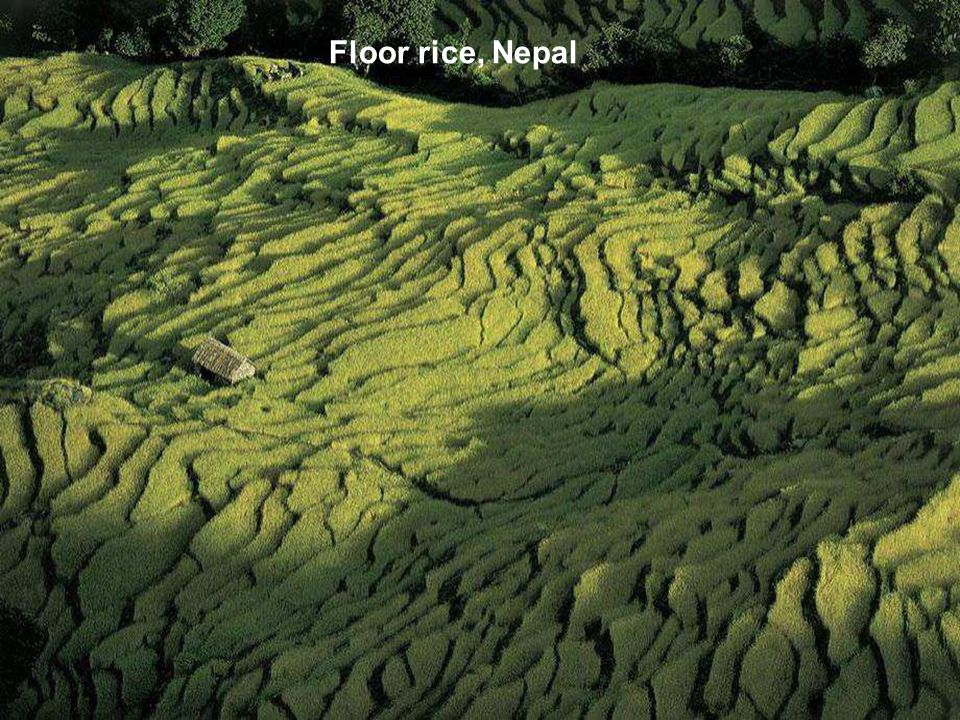 Floor rice, Nepal