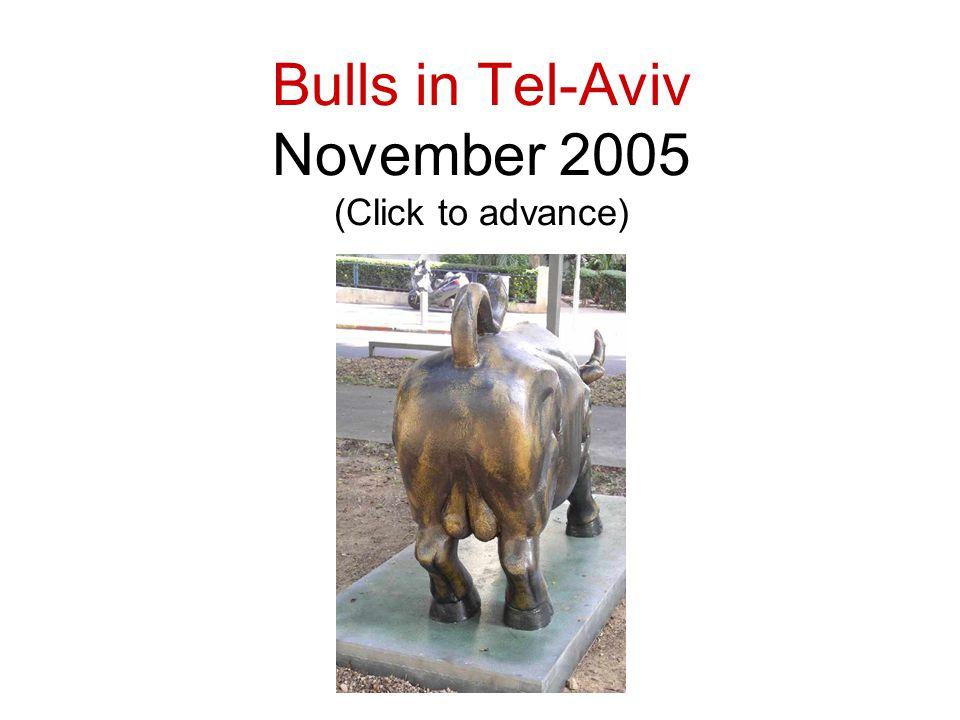 Bulls in Tel-Aviv November 2005 (Click to advance)