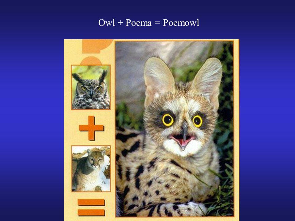 Owl + Poema = Poemowl