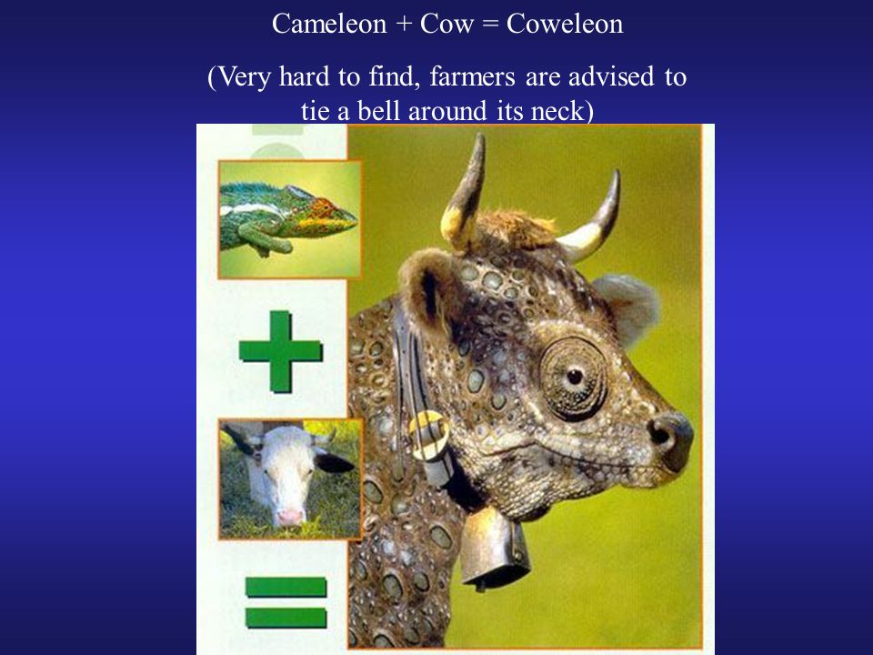 Cameleon + Cow = Coweleon (Very hard to find, farmers are advised to tie a bell around its neck)