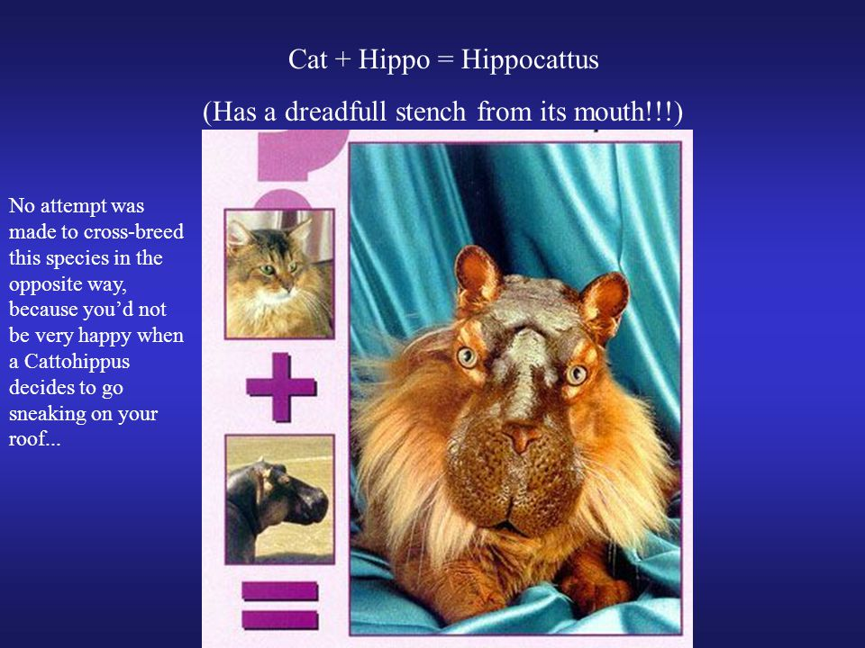 Cat + Hippo = Hippocattus (Has a dreadfull stench from its mouth!!!) No attempt was made to cross-breed this species in the opposite way, because you'd not be very happy when a Cattohippus decides to go sneaking on your roof...