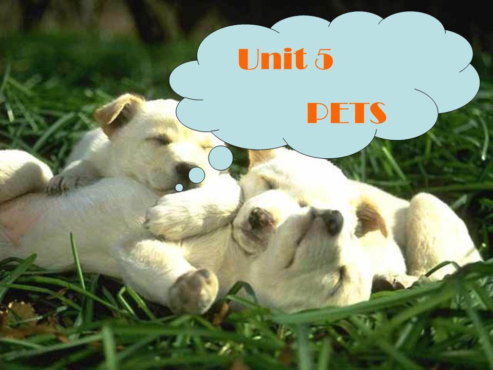 Unit 5 PETS