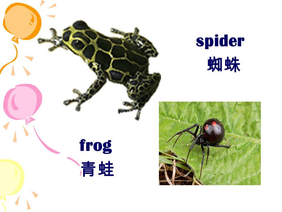 frog 青蛙 spider 蜘蛛
