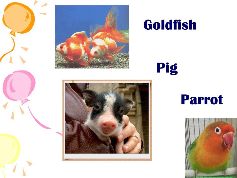 Goldfish Pig Parrot