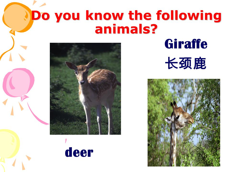 Do you know the following animals deer Giraffe 长颈鹿