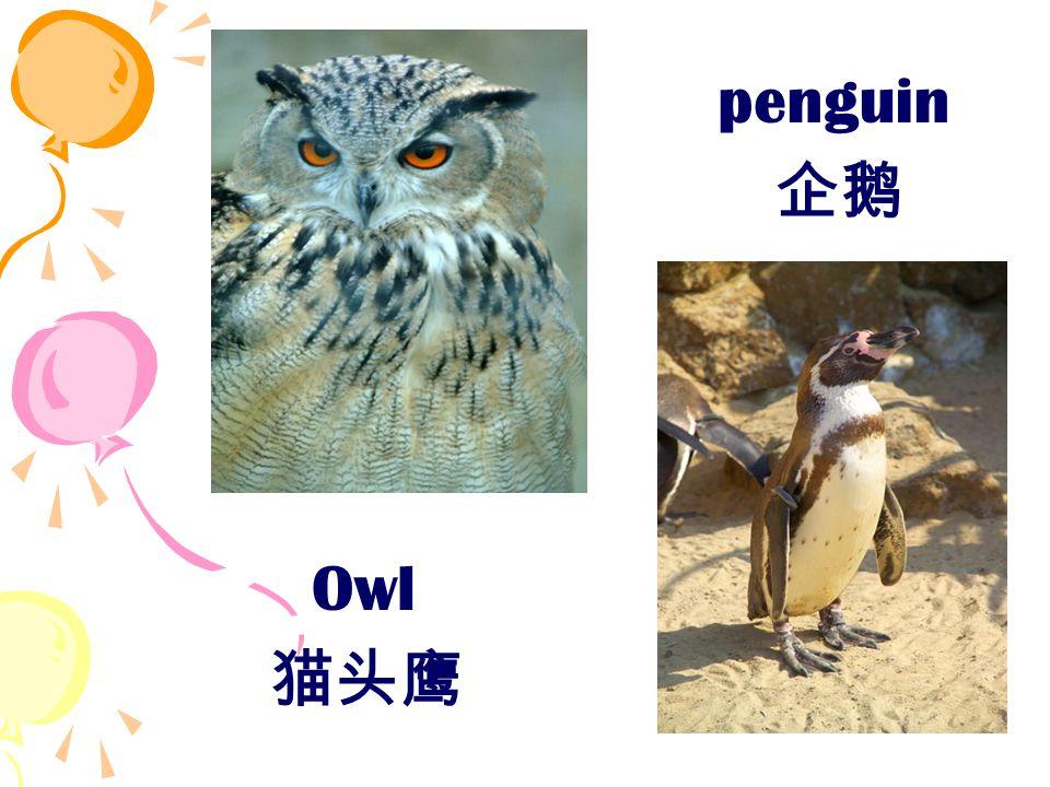 Owl 猫头鹰 penguin 企鹅
