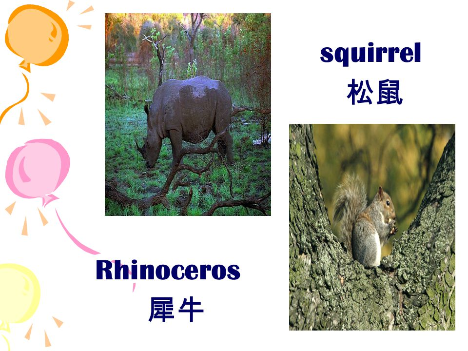 squirrel 松鼠 Rhinoceros 犀牛