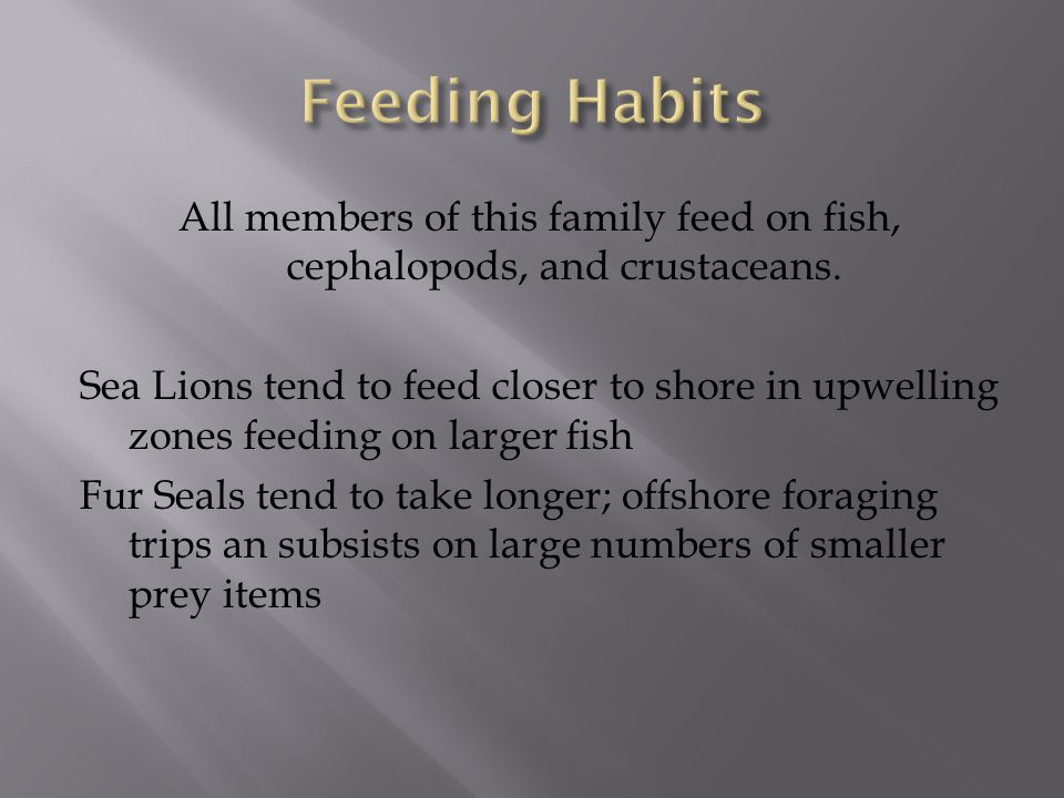 All members of this family feed on fish, cephalopods, and crustaceans.