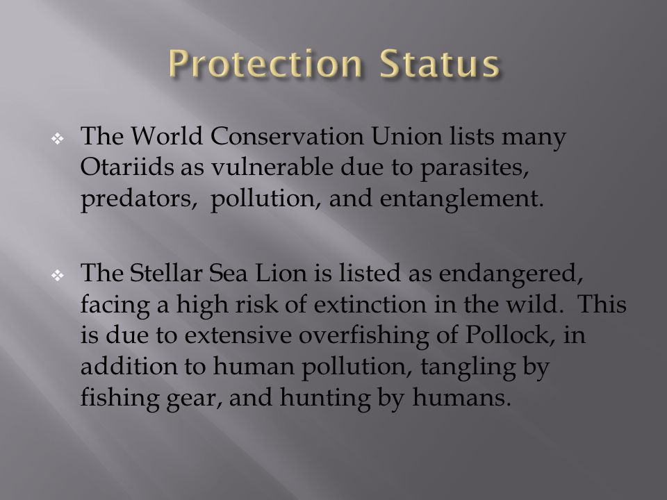  The World Conservation Union lists many Otariids as vulnerable due to parasites, predators, pollution, and entanglement.