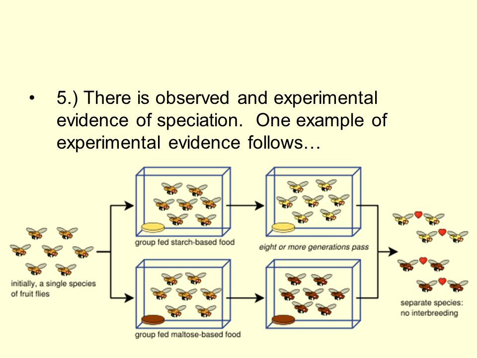 5.) There is observed and experimental evidence of speciation.