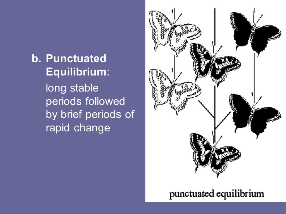 b.Punctuated Equilibrium: long stable periods followed by brief periods of rapid change