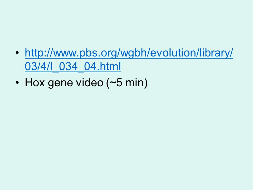 http://www.pbs.org/wgbh/evolution/library/ 03/4/l_034_04.htmlhttp://www.pbs.org/wgbh/evolution/library/ 03/4/l_034_04.html Hox gene video (~5 min)
