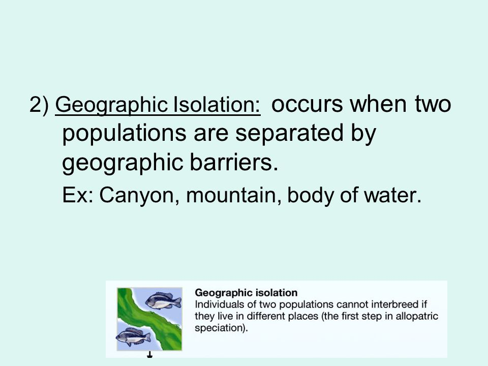 2) Geographic Isolation: occurs when two populations are separated by geographic barriers.