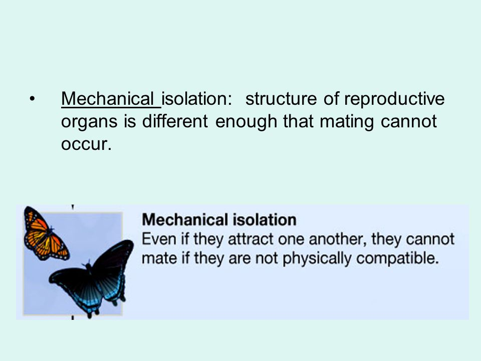 Mechanical isolation: structure of reproductive organs is different enough that mating cannot occur.