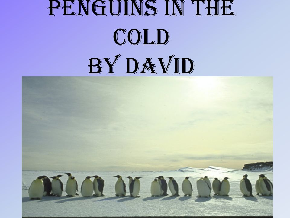Penguins in the cold By David